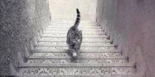 Illusion d'optique : ce chat monte ou descend l'escalier ?